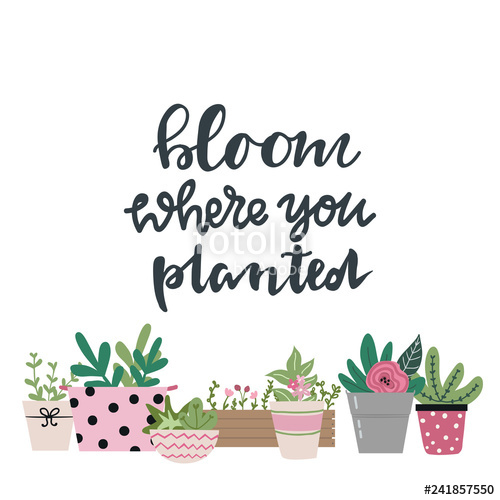 Clipart of bloom where you are planted image royalty free library Bloom where you planted hand drawn lettering words and cute garden ... image royalty free library