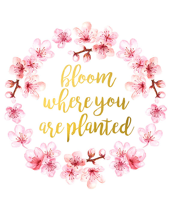 Clipart of bloom where you are planted vector library Bloom Where You Are Planted Print Inspirational Quote Motivational ... vector library
