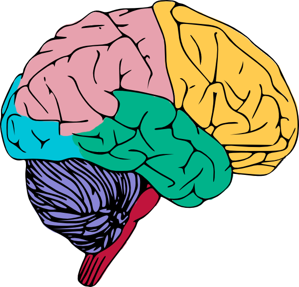 clipartlook. Free clipart of the brain
