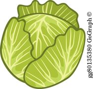 Clipart of cabbage