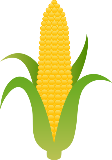 Clipart of corn png free Large Husk of Golden Corn | Clip Art | Yellow corn, Harvest corn ... png free