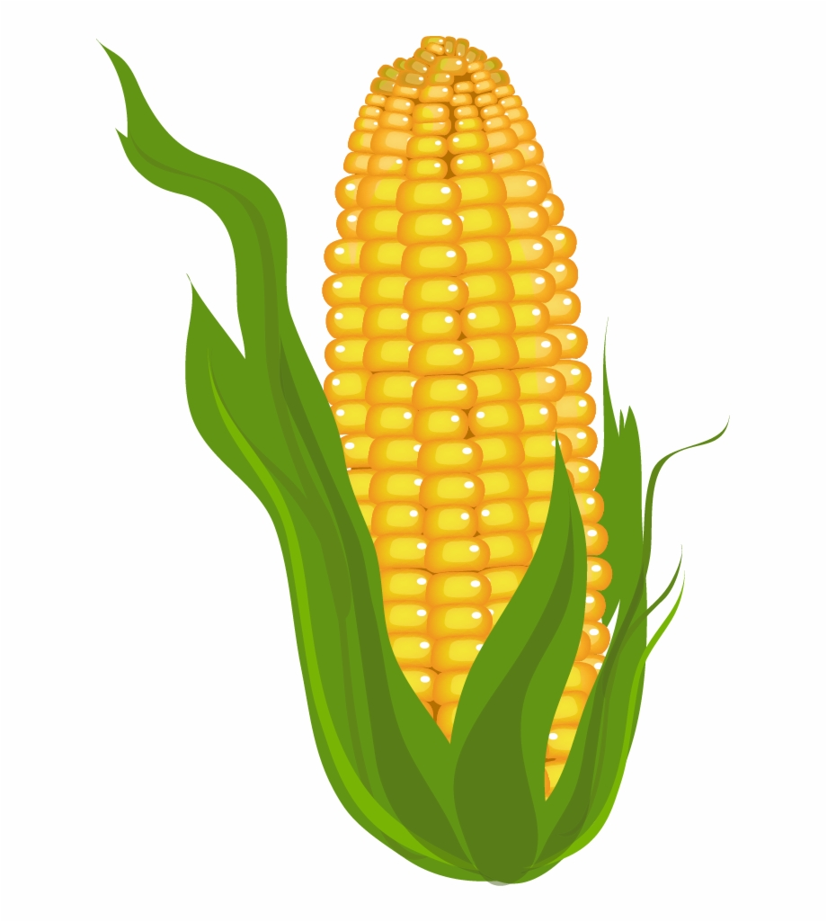 Clipart of corn on the cob svg freeuse download Cliparts For Free - Clipart Corn Free PNG Images & Clipart Download ... svg freeuse download
