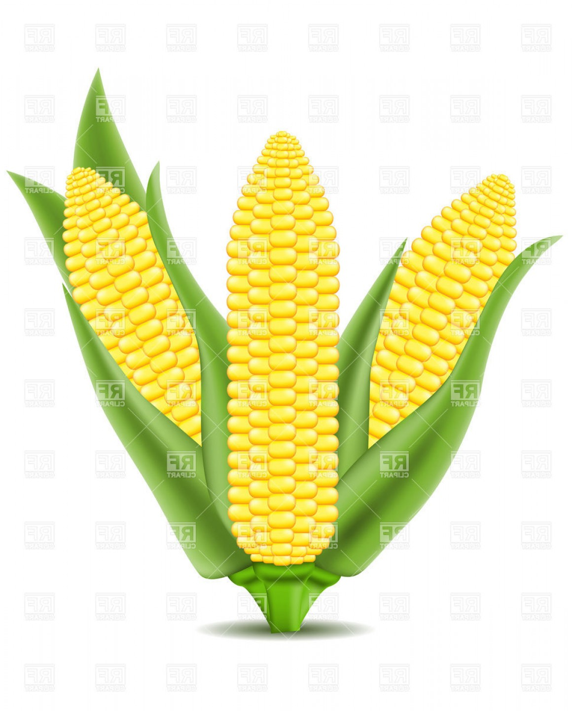 Clipart of corn on the cob banner free download Corn On The Cob Vector Clipart | SOIDERGI banner free download