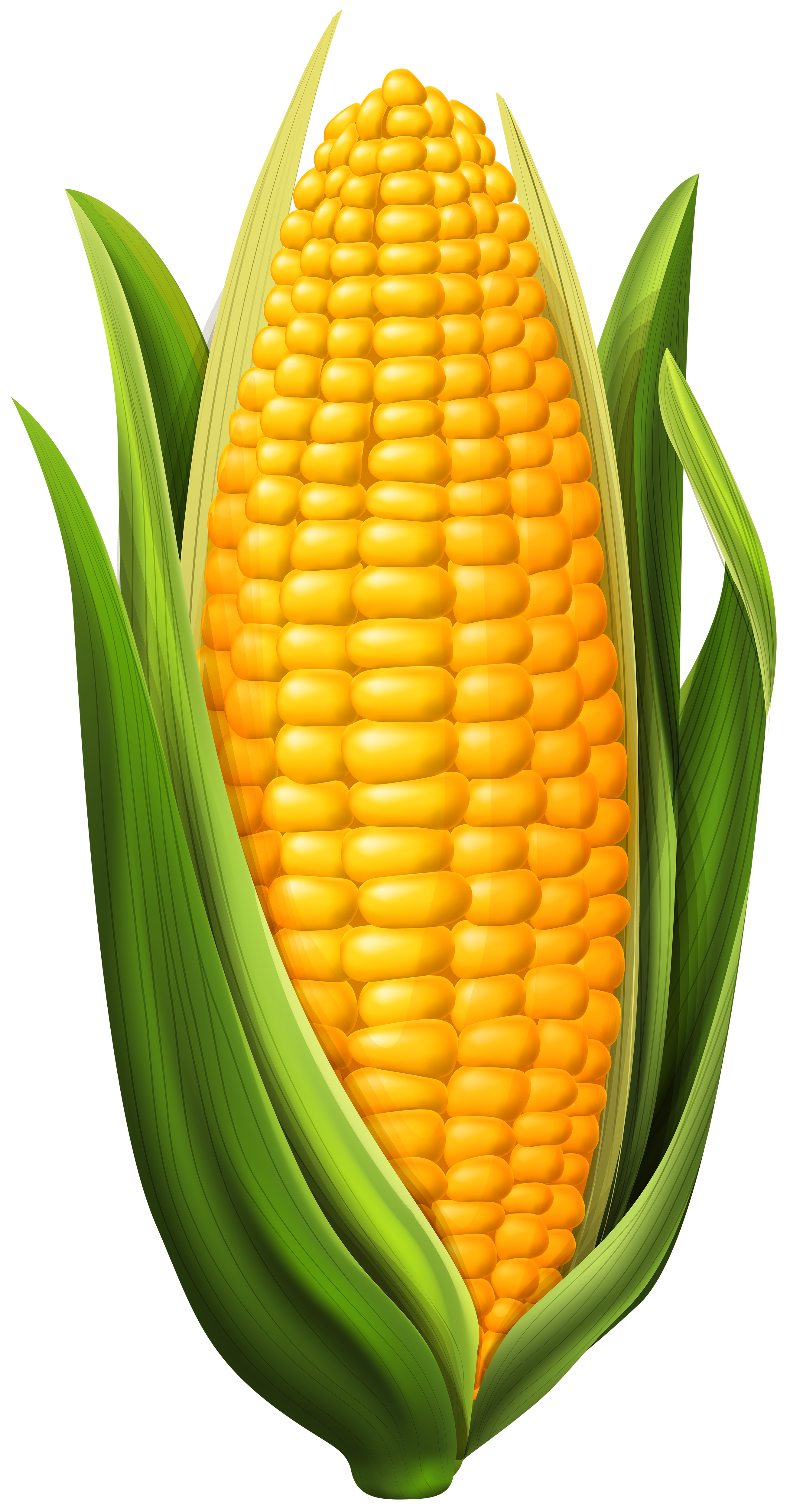 Clipart of corn clip transparent stock Corn PNG Clip Art Image | Gallery Yopriceville - High-Quality ... clip transparent stock
