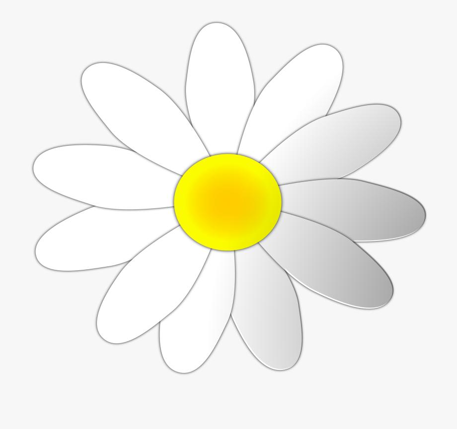 White daisy flower clipart clip transparent Daisy Flower Clipart - Daisy #59791 - Free Cliparts on ClipartWiki clip transparent