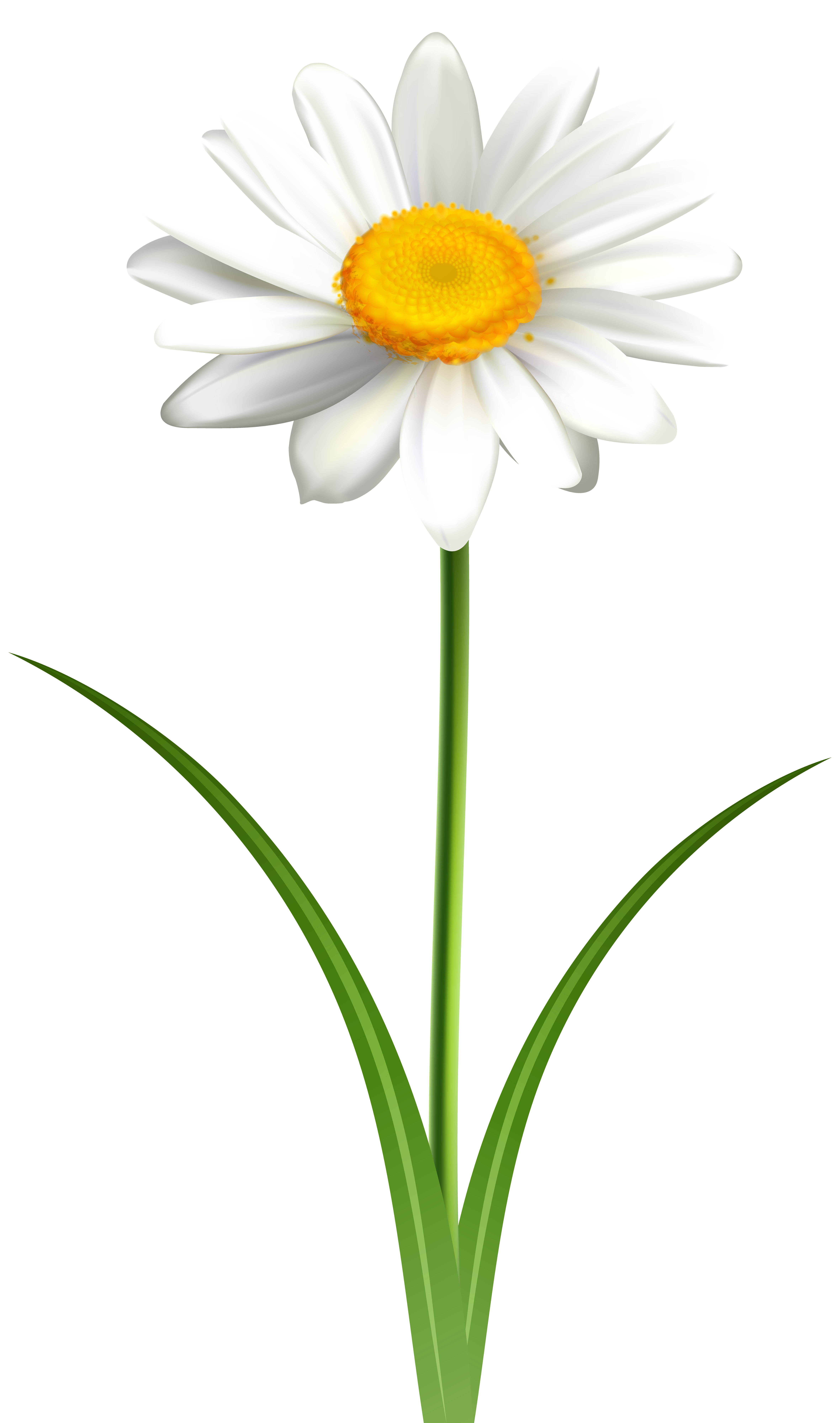 Daisy images clipart clip freeuse Daisy Flower Transparent PNG Clip Art Image | Gallery Yopriceville ... clip freeuse