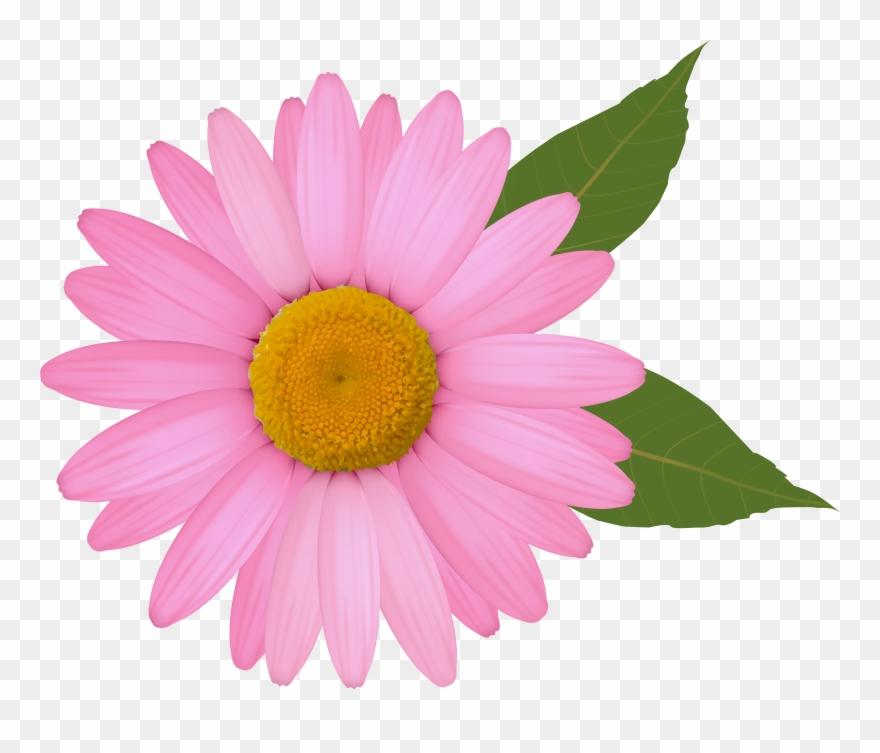 Clipart of daisy png free stock Daisy Clip Art - Pink Daisy Flower Clipart - Png Download (#116055 ... png free stock