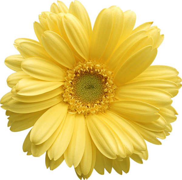 Daisy flower clipart jpg download Yellow Gerber Daisy Clipart | PNG Flowers | Pinterest | Flowers ... jpg download