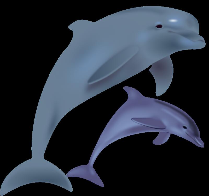 Clipart of dolphins image stock Free Clipart: Dolphins, delfinai, animals | Keistutis image stock
