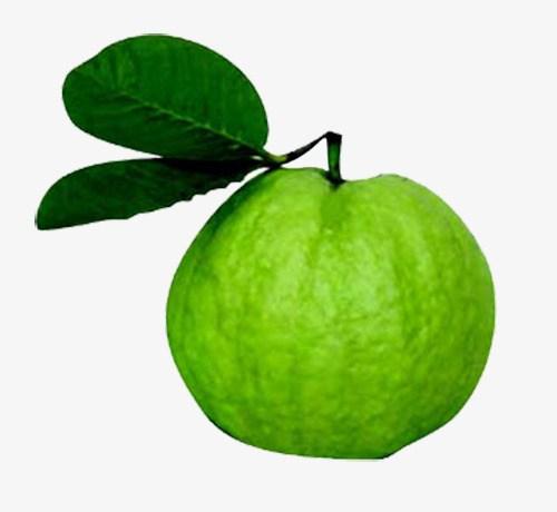 Guava images clipart clip art free download Guava clipart png 3 » Clipart Portal clip art free download