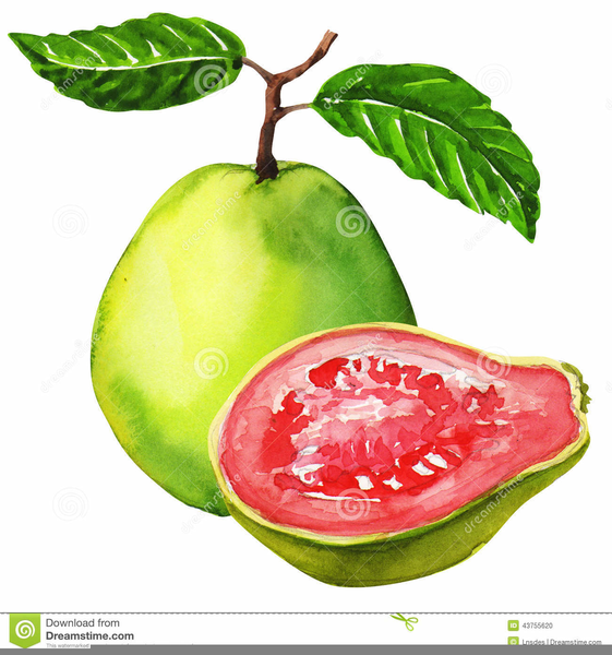Clipart of guava picture free Guava Clipart | Free Images at Clker.com - vector clip art online ... picture free