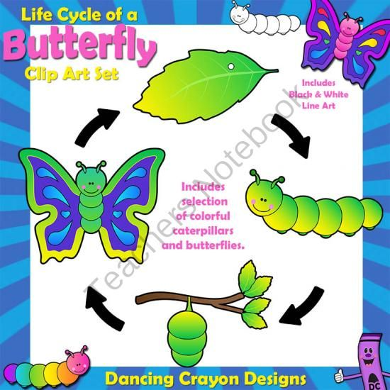 Clipart of life cycle of a butterfly image freeuse stock Butterfly Life Cycle: Caterpillar / Butterfly from ... image freeuse stock