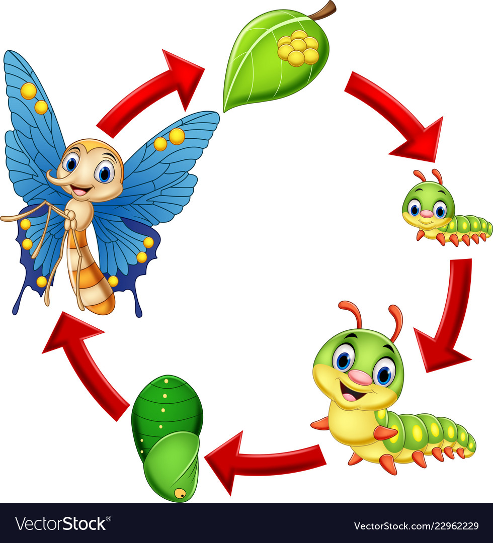 Clipart of life cycle of a butterfly clipart royalty free stock Butterfly life cycle clipart royalty free stock