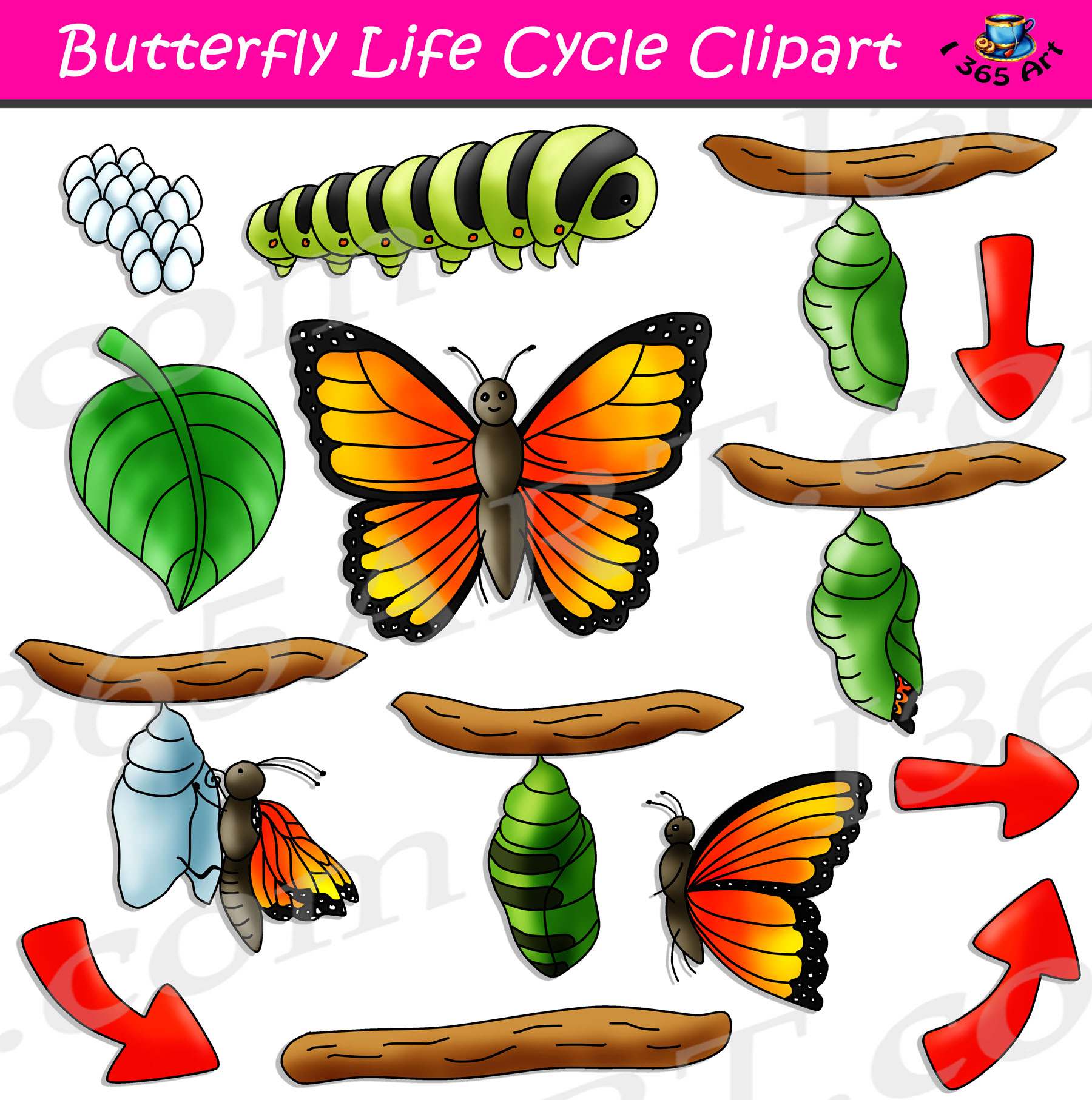 Clipart of life cycle of a butterfly picture royalty free library Butterfly Life Cycle Clipart Bundle picture royalty free library