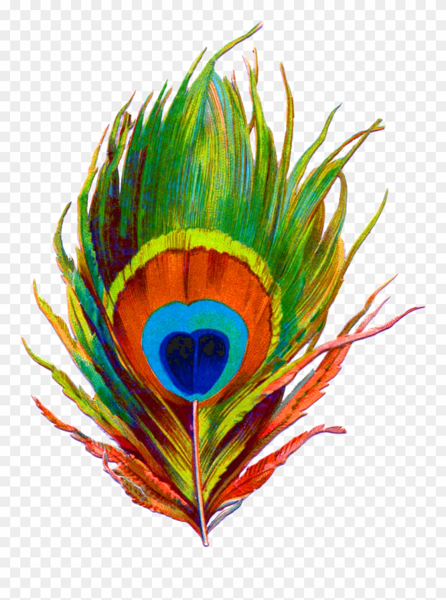 Clipart of peacock feather jpg free download Peacock Feather Png Designs Clipart (#1987109) - PinClipart jpg free download