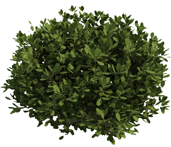Clipart of shrubs free Image result for shrubs clipart transparent background | tree ... free