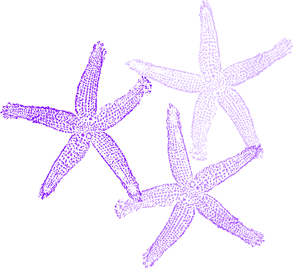 Star fish clipart png vector black and white download Coral Starfish Clip Art at Clker.com - vector clip art online ... vector black and white download