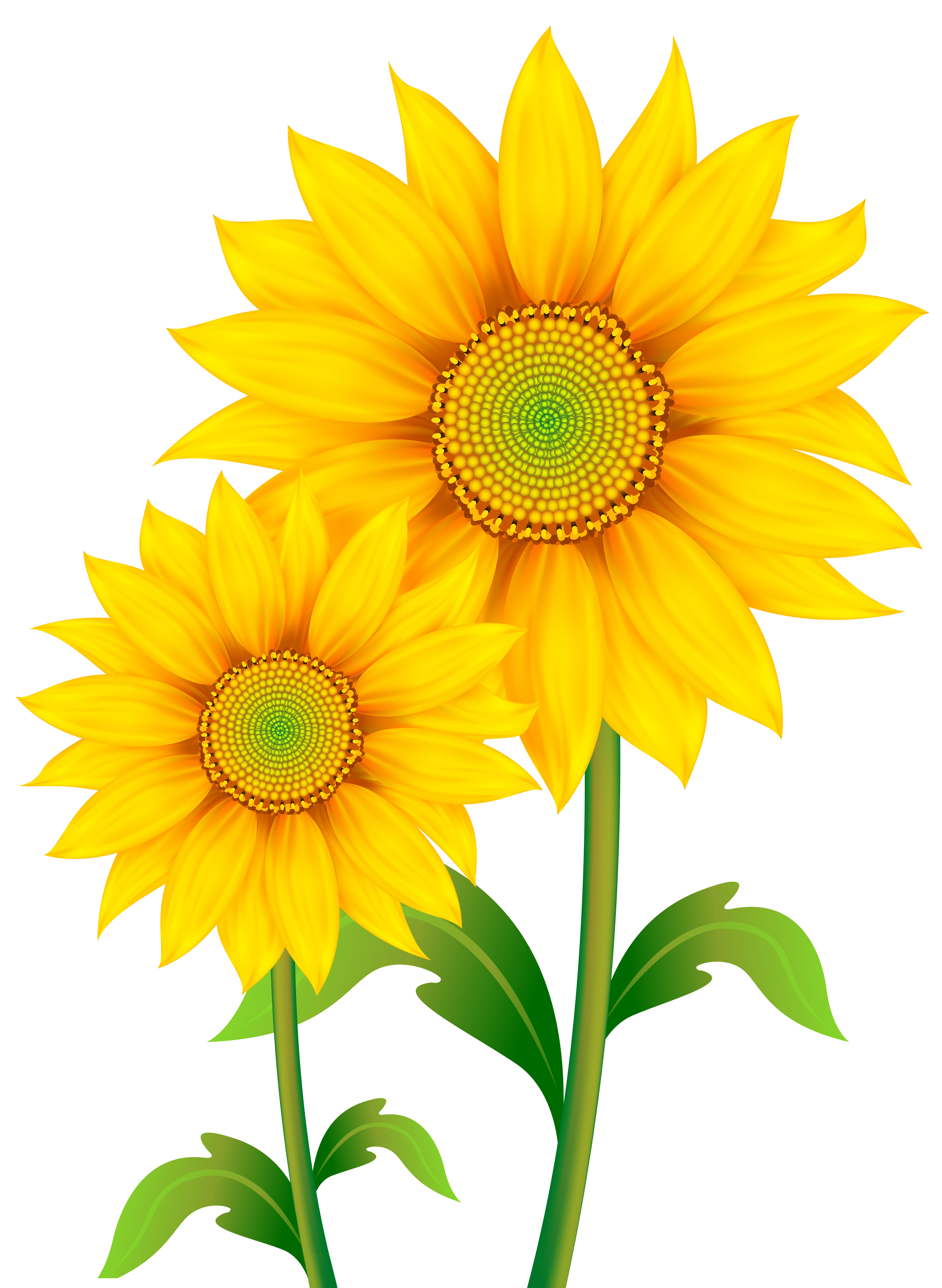 Sun flower clipart picture free stock Transparent Sunflowers Clipart PNG Image | Gallery Yopriceville ... picture free stock