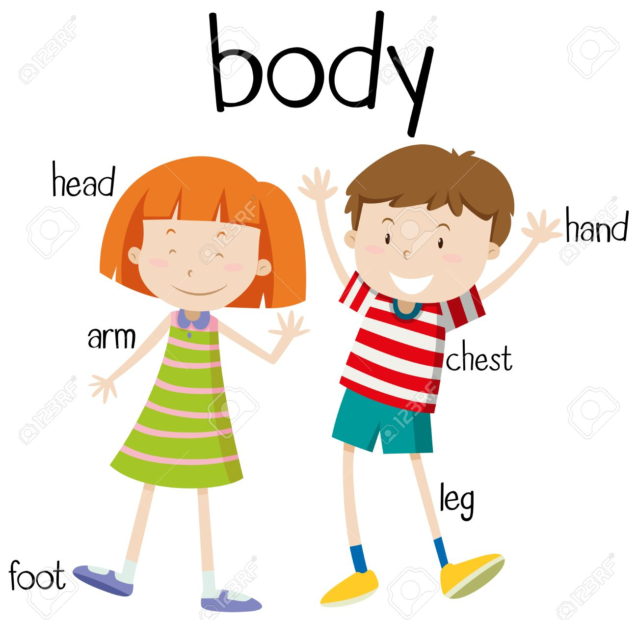 Clipart of the body graphic Clipart Of Human Body Part Human Body Parts Diagram Illustration ... graphic