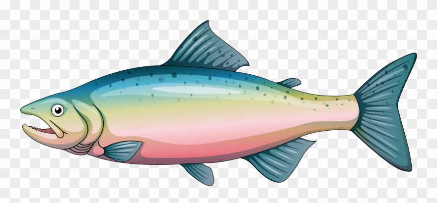 Trout clipart vector black and white library Яндекс - Фотки - Cartoon Rainbow Trout Clipart (#1025125) - PinClipart vector black and white library