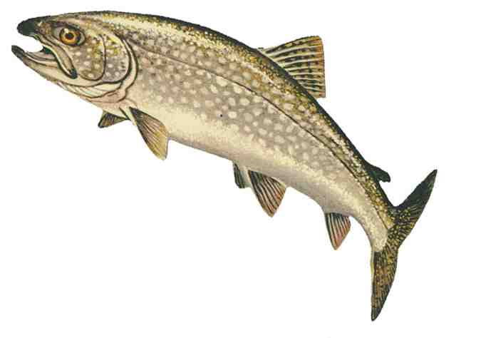Trout clipart image stock 94+ Trout Clip Art | ClipartLook image stock