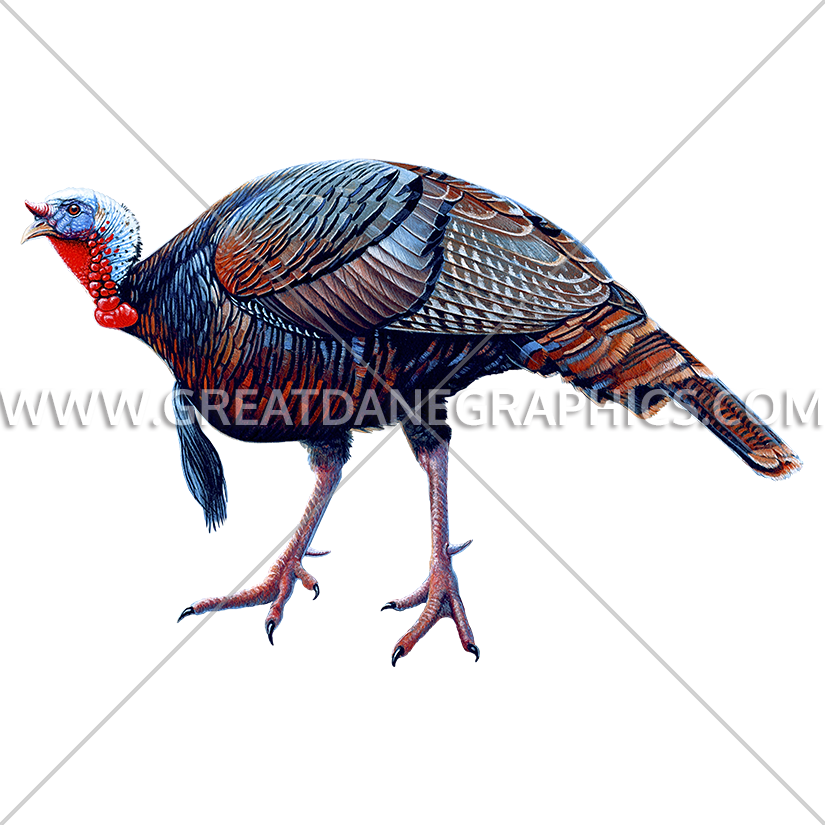 Turkey Walking | Production Ready Artwork for T-Shirt Printing banner black and white library