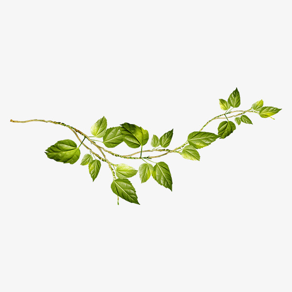 clipart-of-vines-and-branches-1.jpg