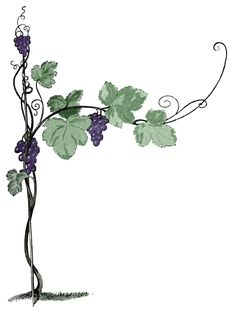 Clipart of vines and branches svg library 10 Best Vine and branches images in 2012 | Vine, branches, Vines ... svg library