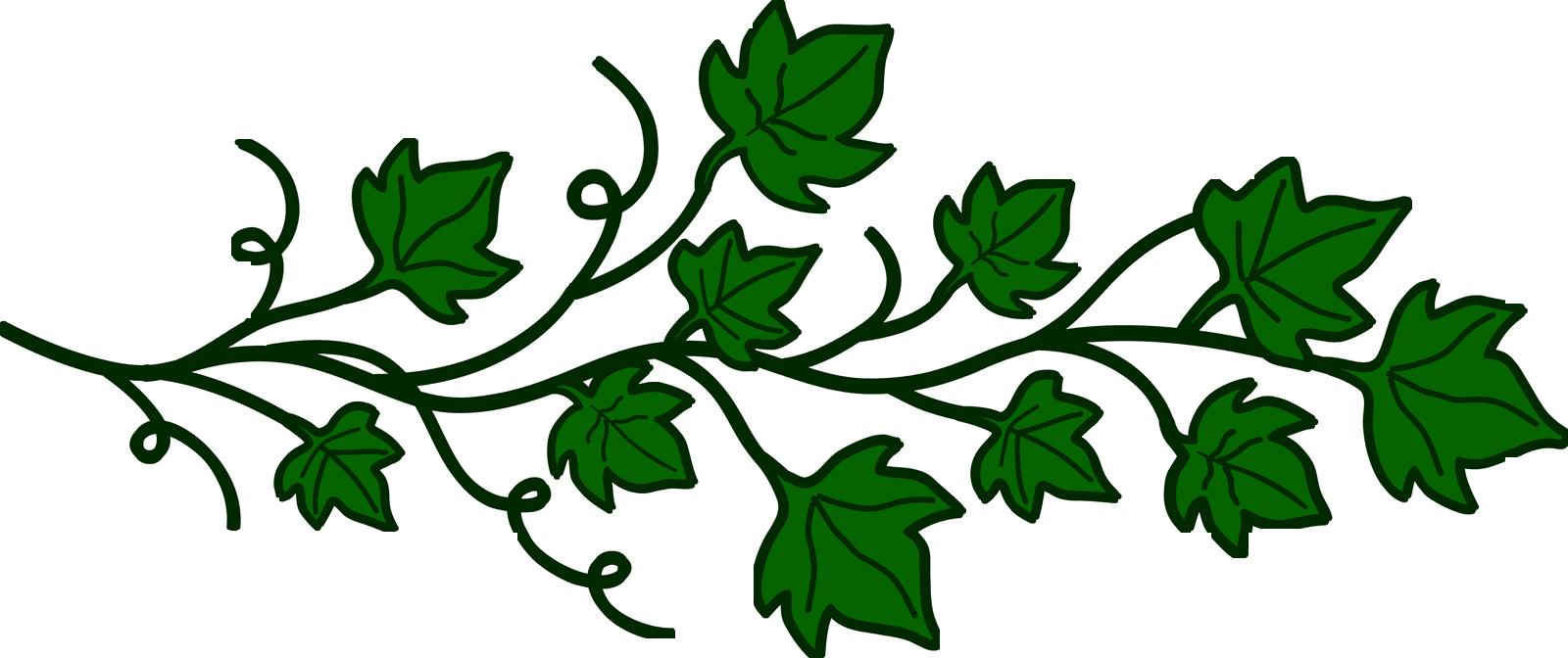 Vine images clipart vector freeuse stock Free Vine Cliparts Transparent, Download Free Clip Art, Free Clip ... vector freeuse stock