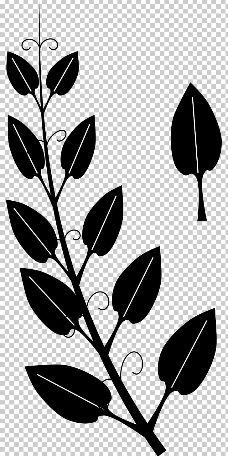 Clipart of vines and ivey black and white clipart royalty free stock Vine Tendril Drawing Ivy PNG, Clipart, Black, Black And White ... clipart royalty free stock