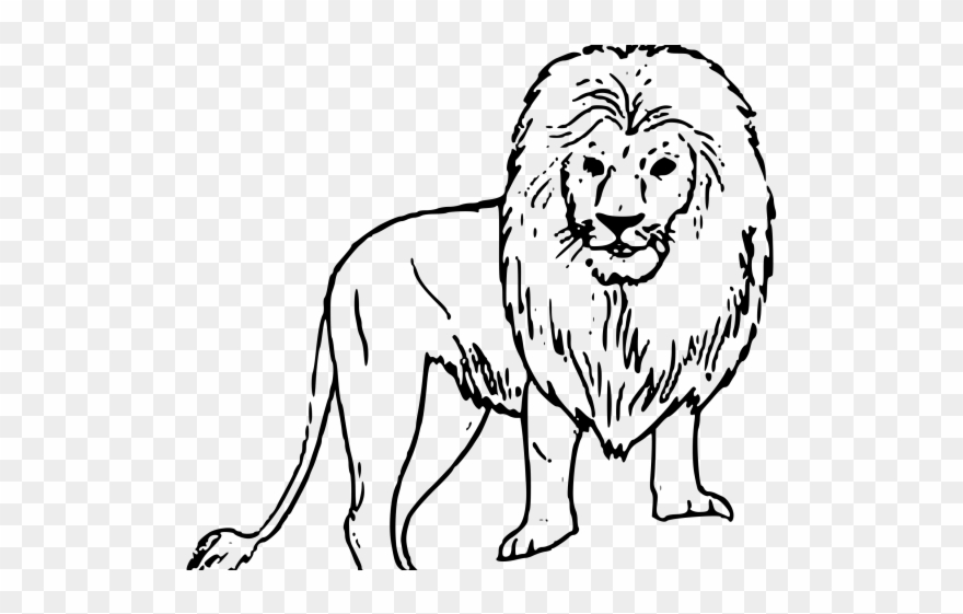 Lion drawing clipart png freeuse White Lion Clipart Black Background - Wild Animals Drawing Easy ... png freeuse