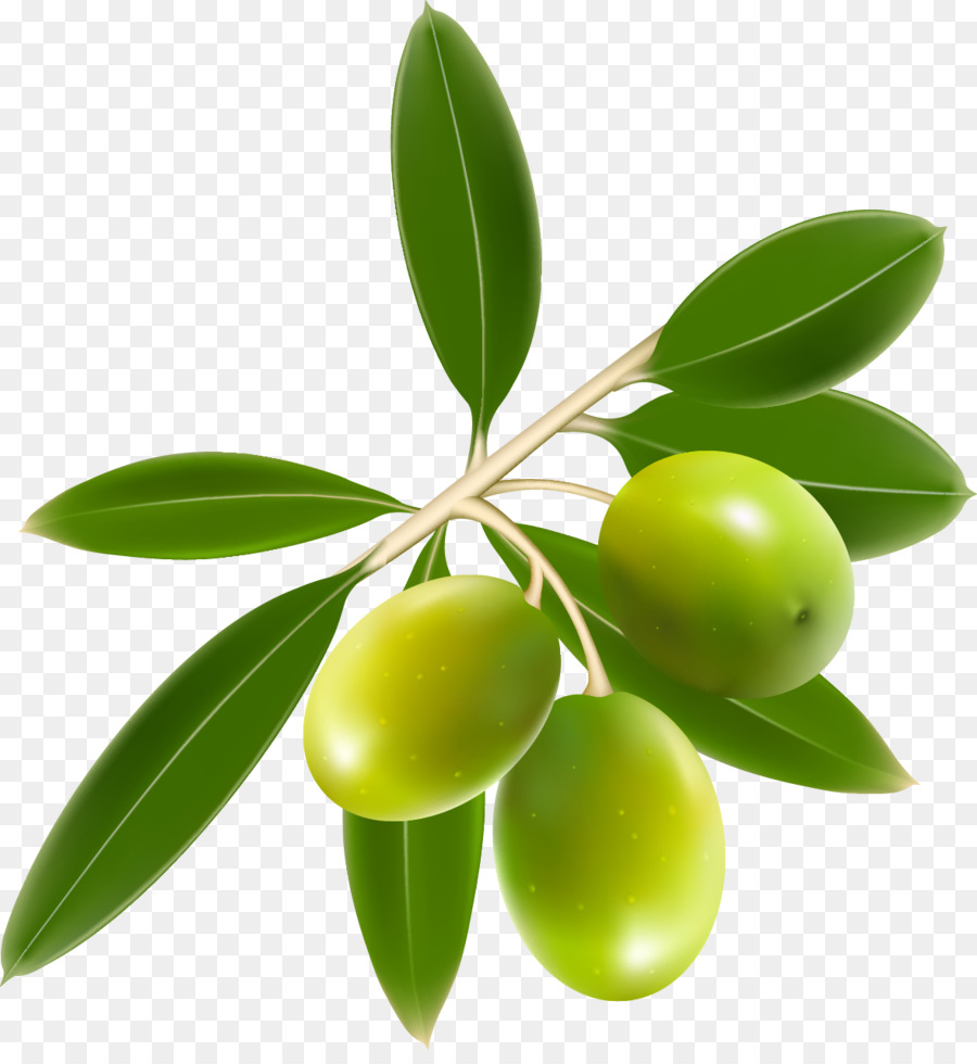 Clipart olives picture stock Olive Tree png download - 1179*1267 - Free Transparent Olive png ... picture stock