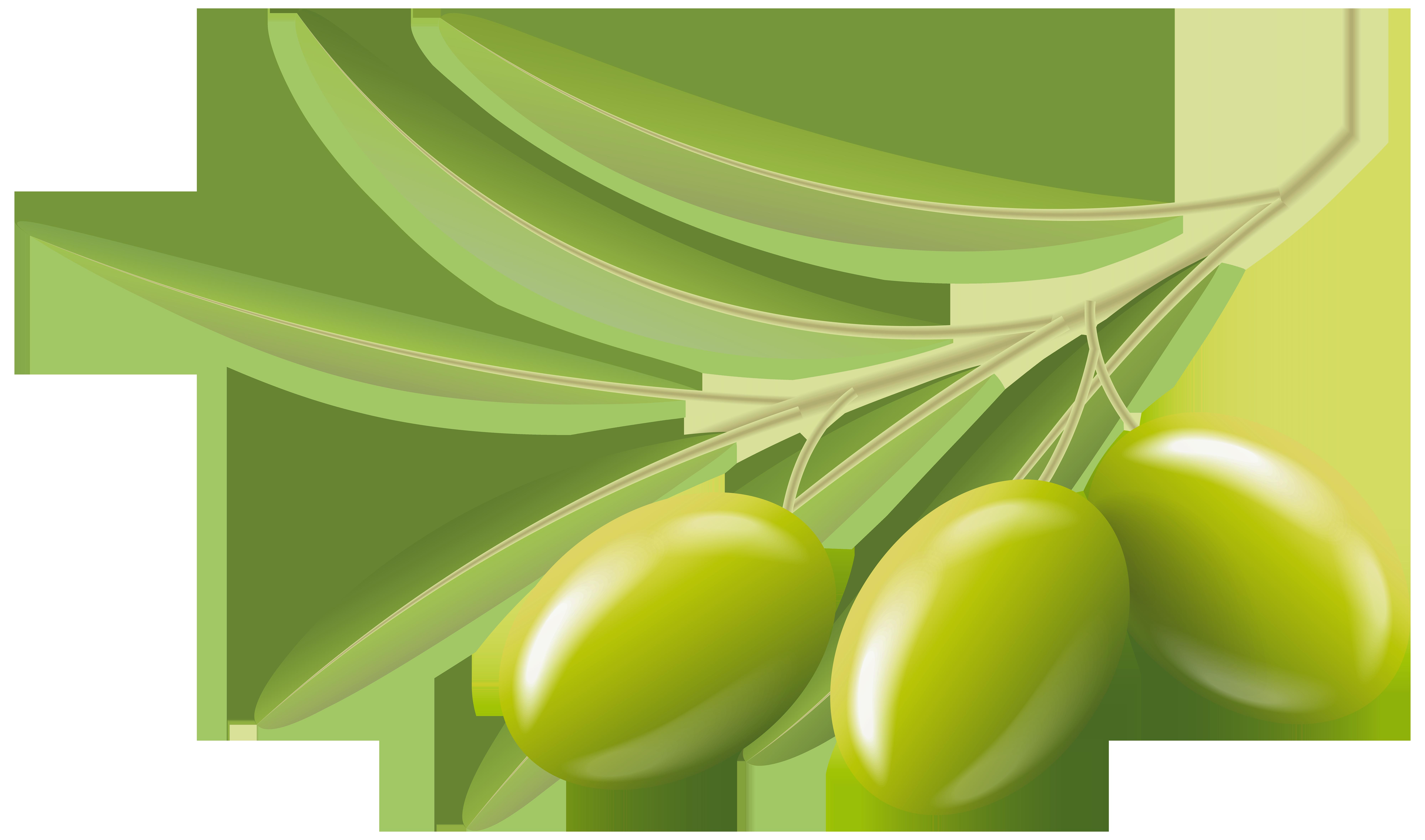 Clipart olives png transparent stock Green Olives Transparent Clip Art Image | Gallery Yopriceville ... png transparent stock