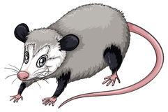 Clipart opposum image library library 51+ Possum Clipart | ClipartLook image library library