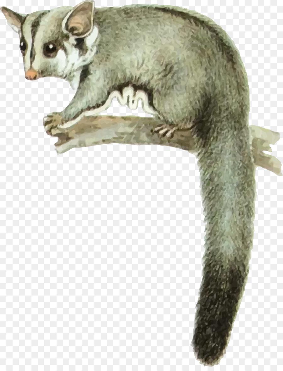 Possun clipart vector royalty free download Rat Cartoon clipart - Opossum, Rat, transparent clip art vector royalty free download