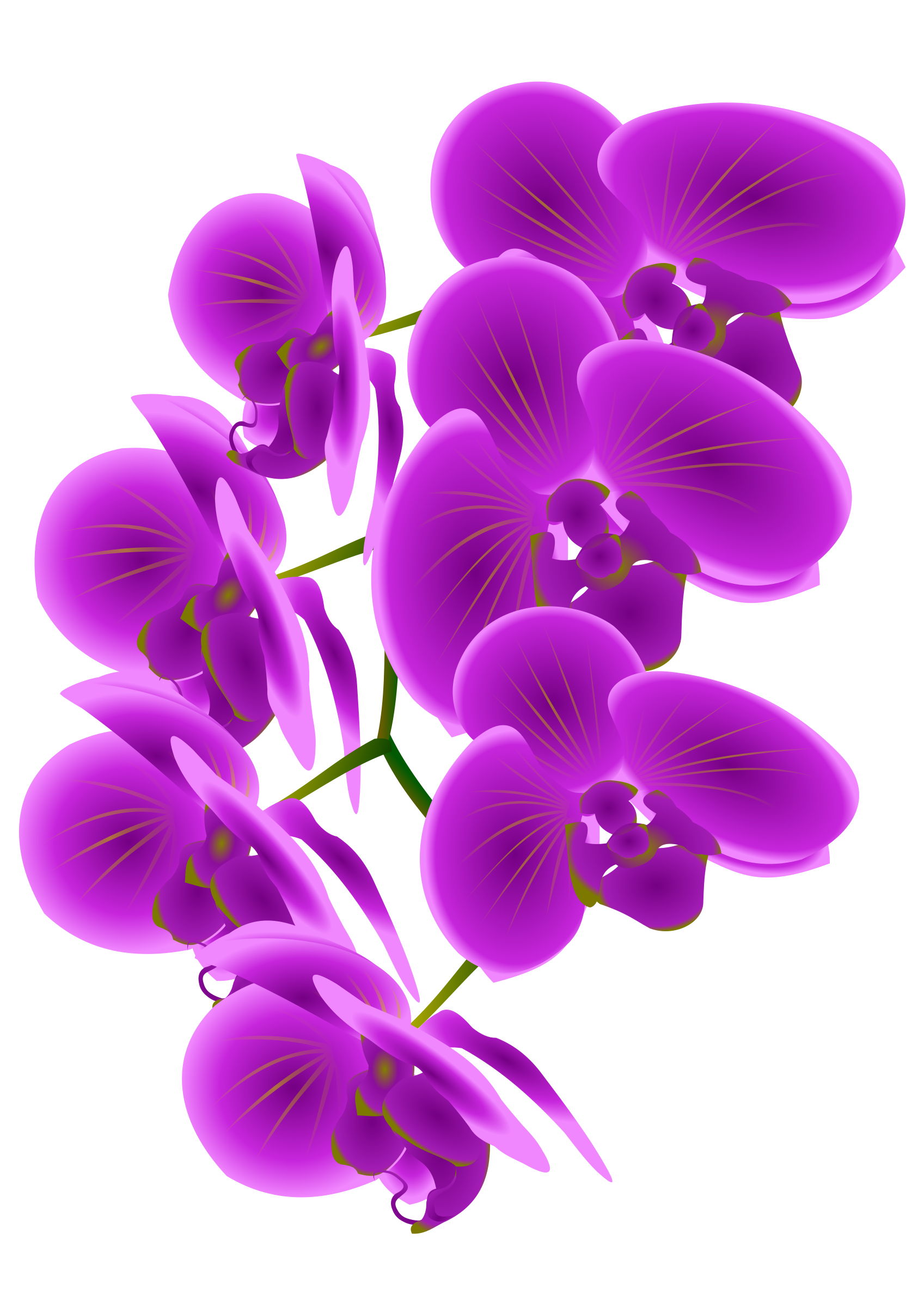 Orchid flower clipart clip art transparent download 28+ Collection of Purple Orchid Clipart   High quality, free ... clip art transparent download