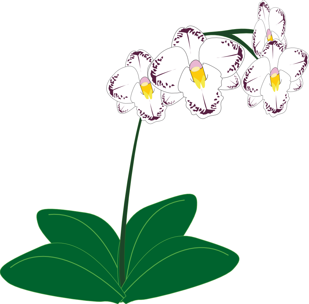Flower clipart with roots picture transparent gousicteco: Orchid Clipart Black And White Images picture transparent