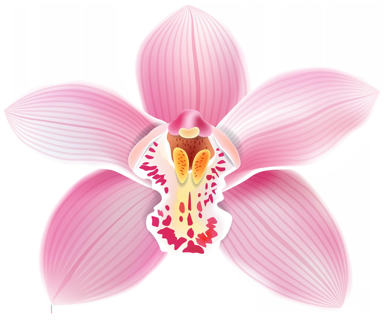 Vanilla flower clipart svg freeuse download orchid png - Поиск в Google | Cuba party moodboard | Pinterest ... svg freeuse download
