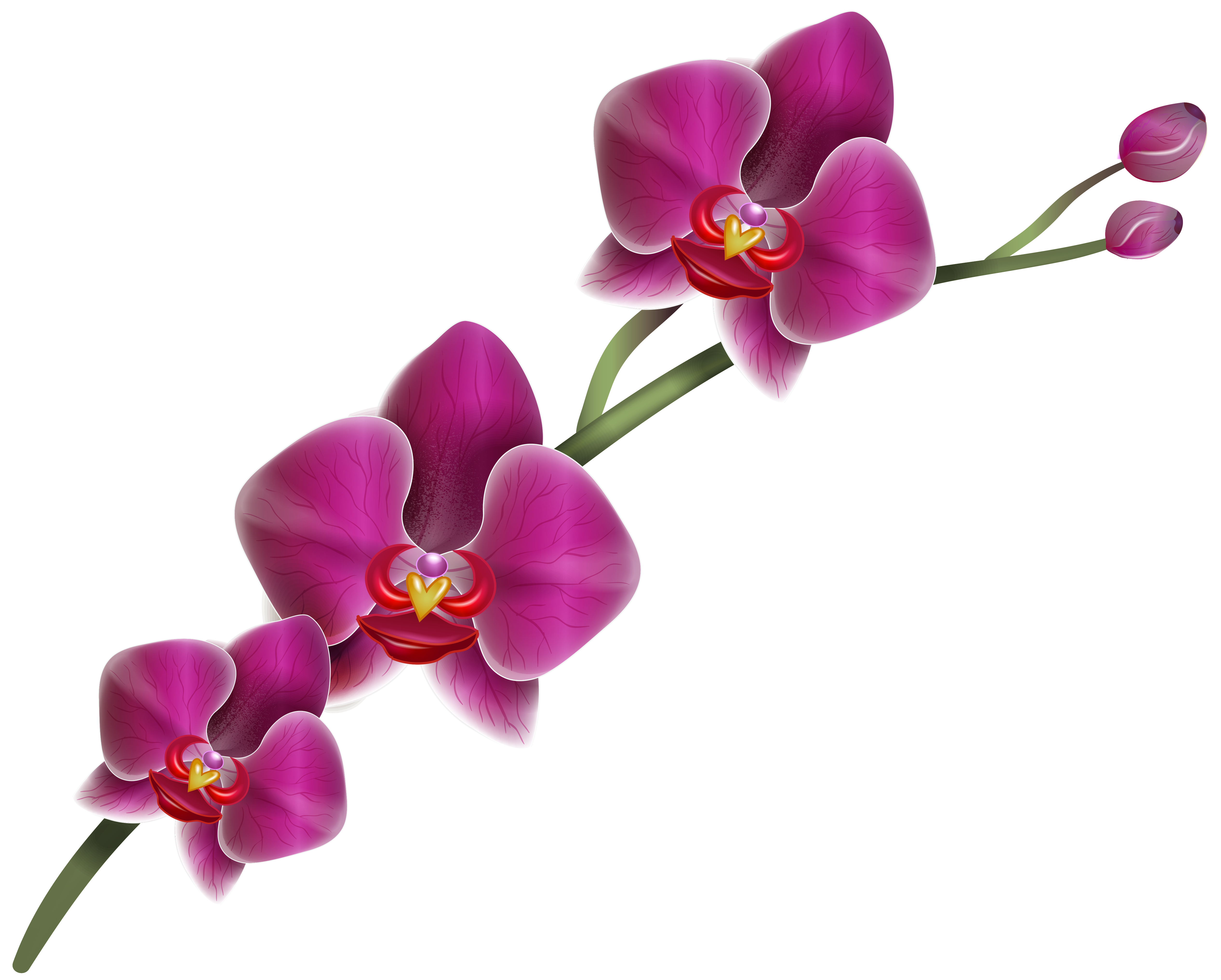 Orchid flower clipart image library library Purple Orchid Clipart PNG Image   Gallery Yopriceville - High ... image library library