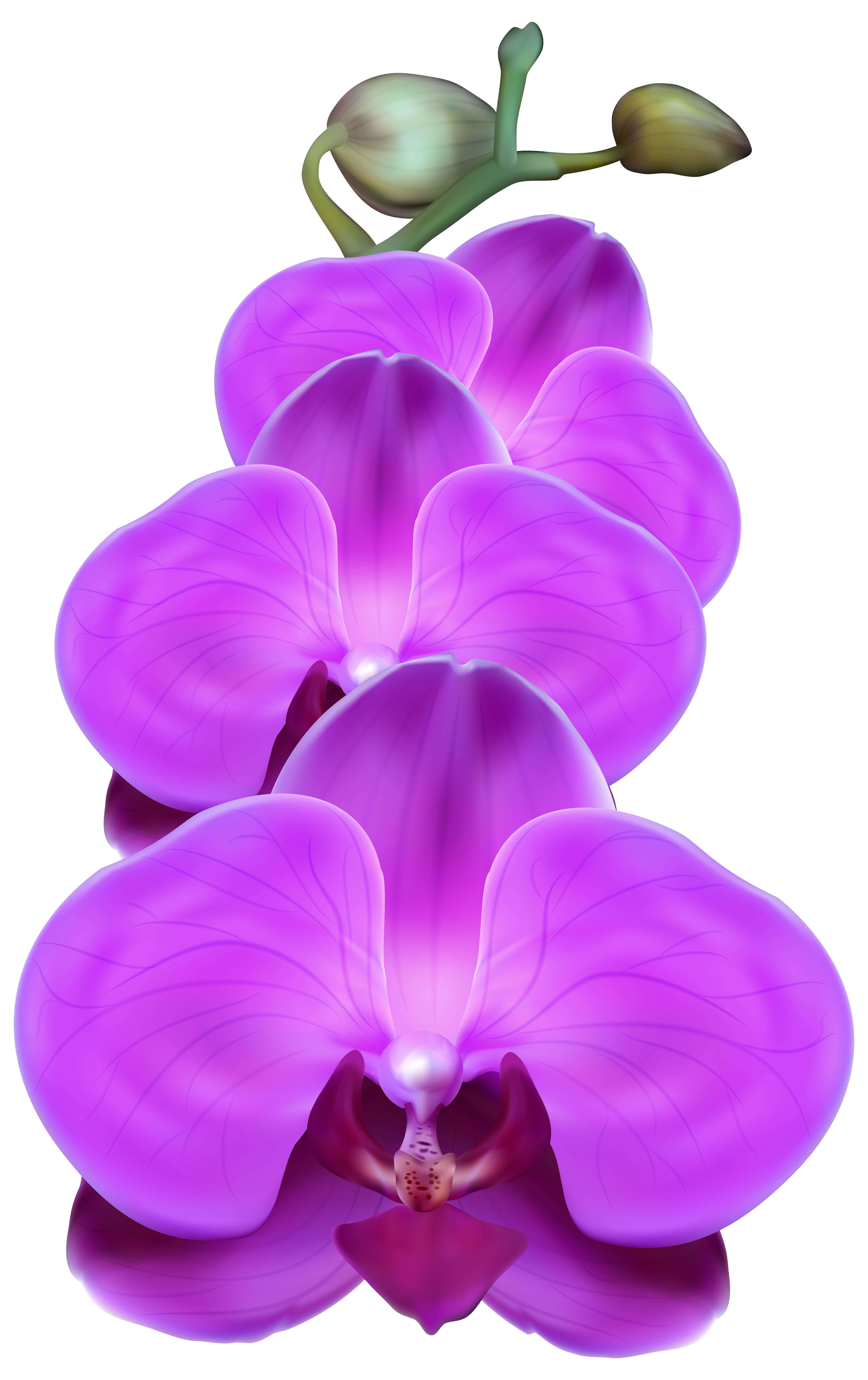 Orchid flower clipart vector free Purple Orchid PNG Transparent Clip Art Image   Gallery Yopriceville ... vector free
