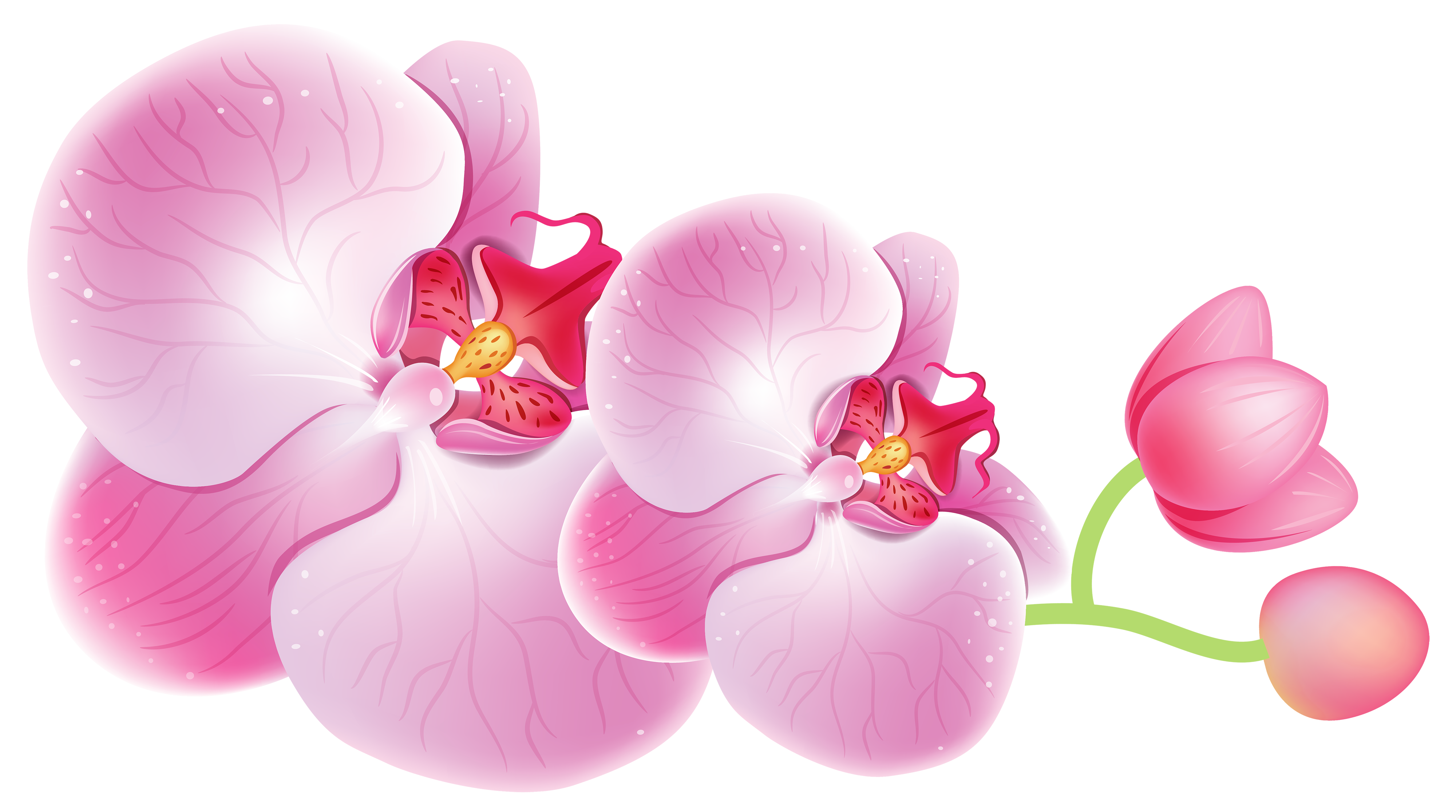Orchid flower clipart vector free download Orchids PNG Clipart - Best WEB Clipart vector free download