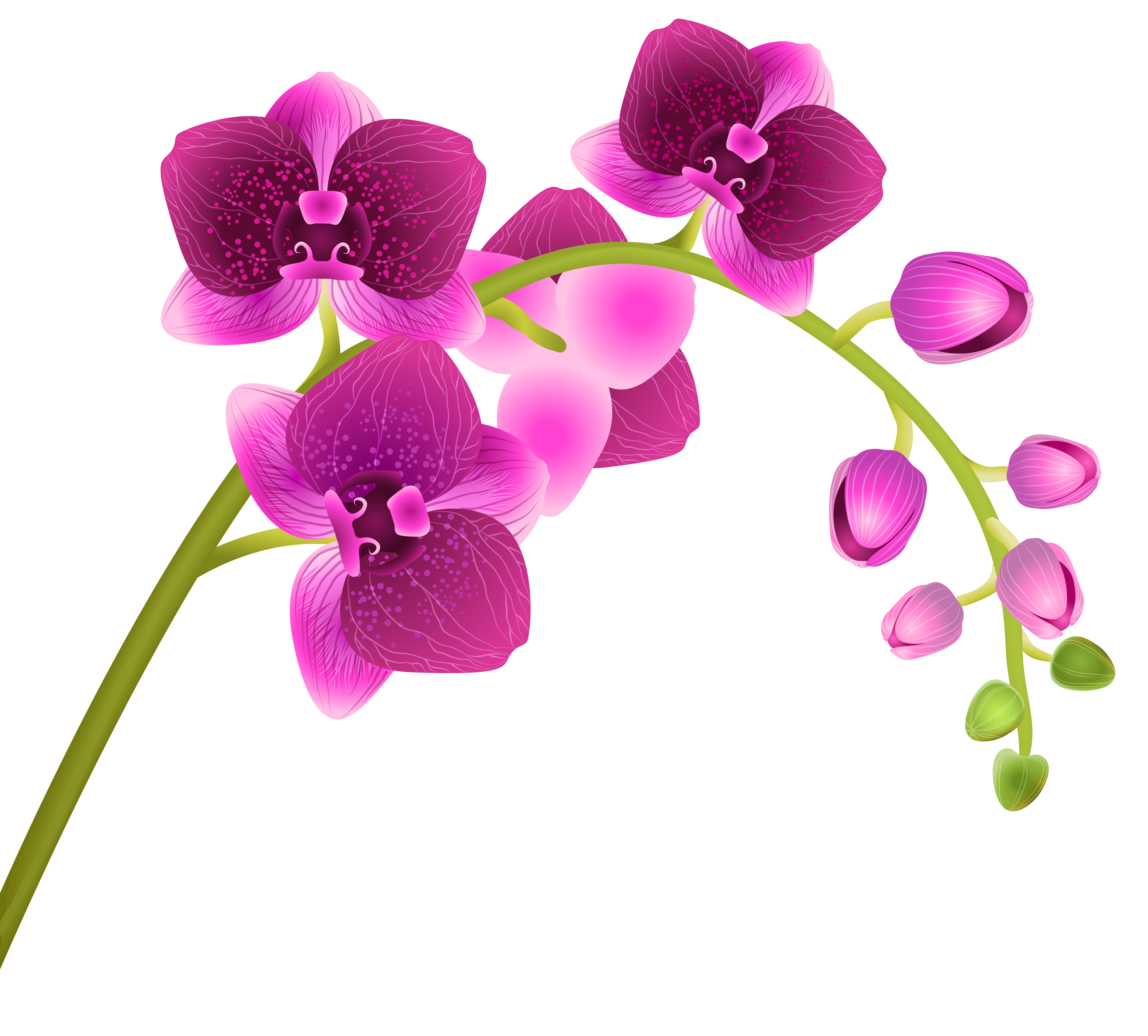 Orchid flower clipart jpg free Orchid Flower Transparent PNG Clip Art Image   Gallery Yopriceville ... jpg free