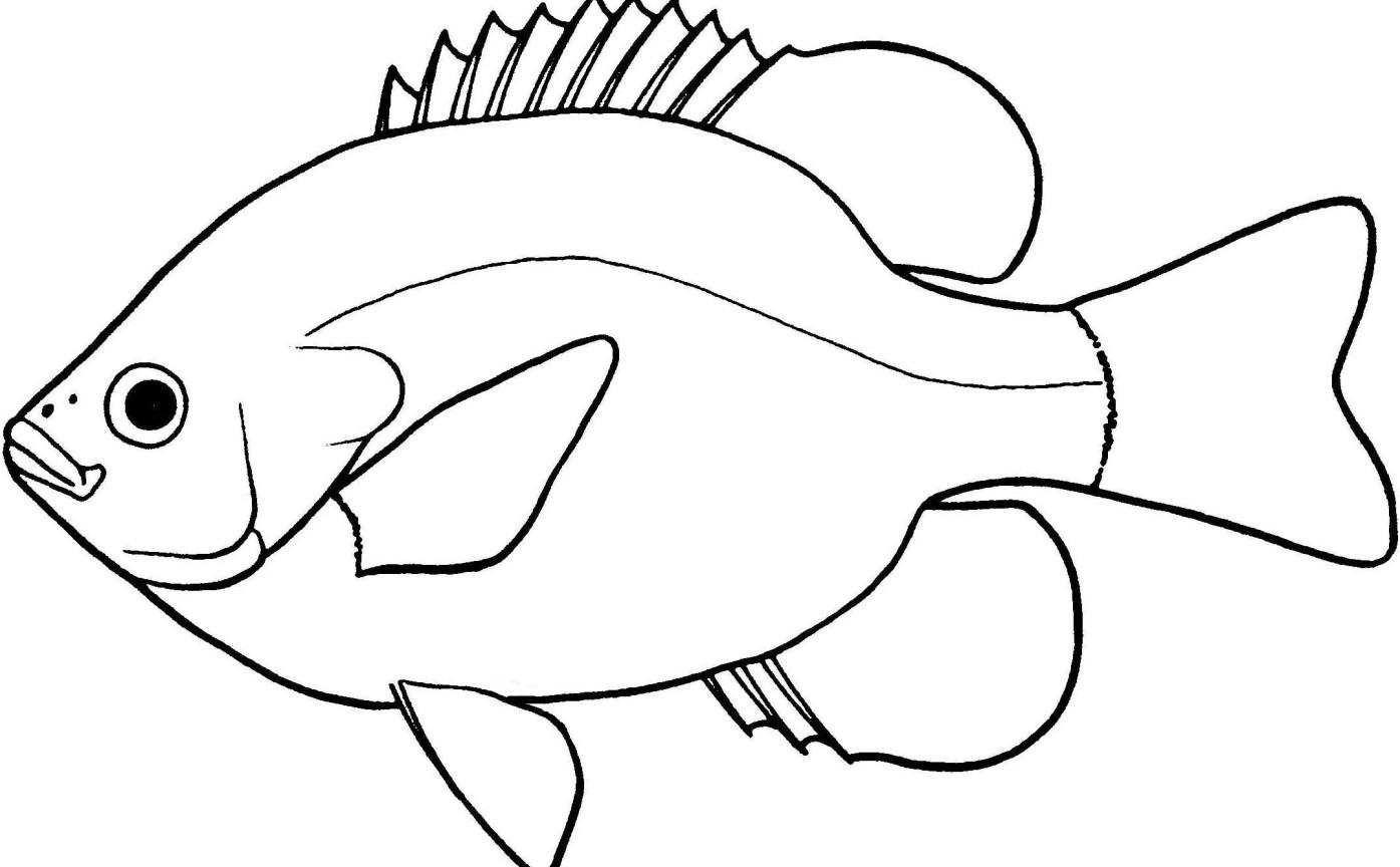 Clipart outline pictures banner stock Fish Clipart Outline Autosparesuk Within Clipart Black And White banner stock