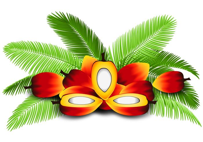 Clipart palm oil jpg free download Palm Oil Free Vector Art - (5,004 Free Downloads) jpg free download