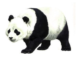 Clipart panda svg transparent stock clipart panda | Clipart svg transparent stock