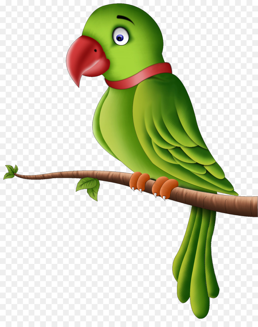 Clipart parrot pictures png freeuse download Bird Parrot clipart - Parrot, Bird, transparent clip art png freeuse download