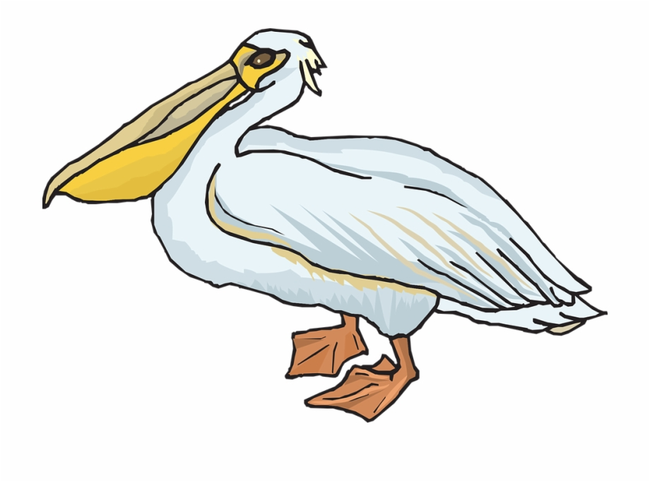Clipart pelican jpg transparent Pelican Png - Pelican Clipart Png, Transparent Png Download For Free ... jpg transparent