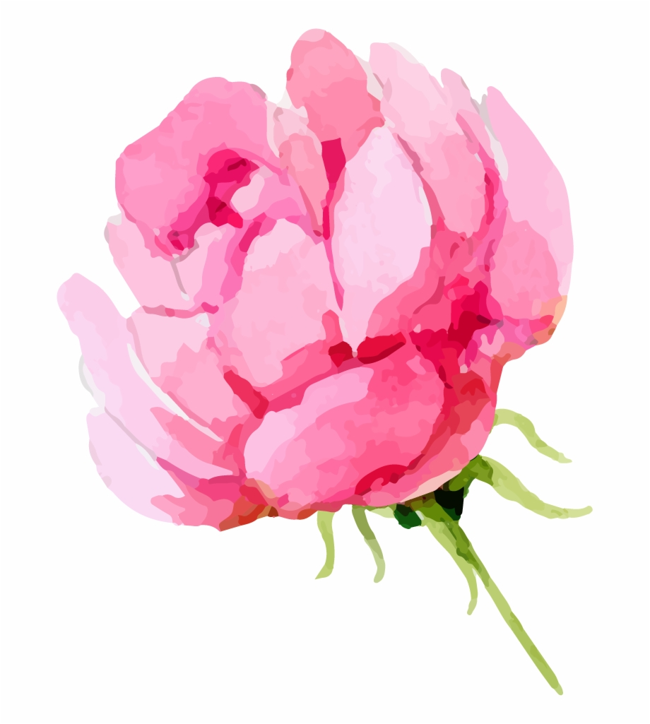 Clipart peonies picture transparent Share This Article - Transparent Background Peonies Clipart Free PNG ... picture transparent