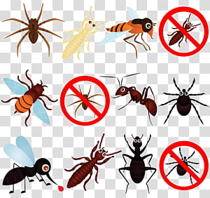 Clipart pests clip library Insect Computer Icons Pest Control Bed bug, insect transparent ... clip library