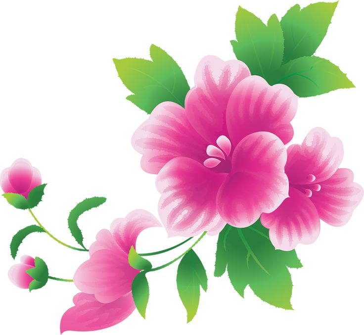 Clipart photos of flowers. Pictures clipartfest large pink